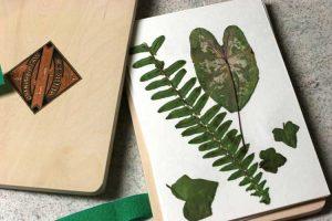 395 Pressed Ferns Leaves Wendy Bellino CS